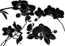 Orchid flowers collection. Isolated on a white background vector illustration