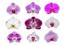 Orchid flowers collection isolated on white background, path stock images