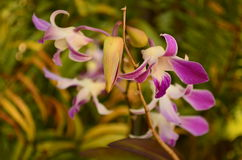 Orchid flowers. Colorful orchid flowers decorate the garden and general Stock Photos