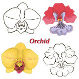 Orchid flowers. contours of flowers. Stock Image