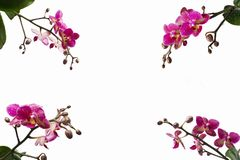 Orchid flowers in the corners of the photo royalty free stock photos