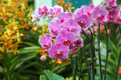 Orchid flowers display Stock Image