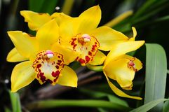 Orchid flowers, Florida Stock Image