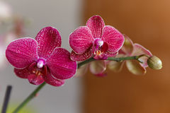 Orchid flowers. Orchid flower on colorful background Stock Photo