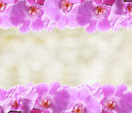 Orchid flowers frame Stock Photography