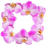 Orchid Flowers Frame isolated on white Royalty Free Stock Photos