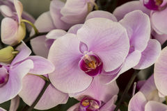 Orchid flowers Stock Photos