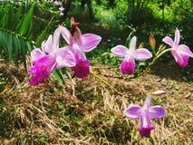 Orchid flowers garden Green plants botanical landscape Nature garden stock image