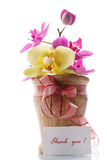 Orchid flowers with gratitude Royalty Free Stock Photos