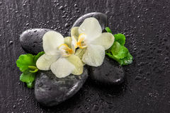 Orchid flowers, green leaves, stones and water drops Royalty Free Stock Photos