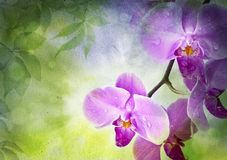 Orchid flowers and green leaves on a vintage paper stock illustration