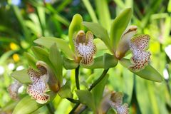 Orchid flowers in a greenhouse. Stock Photography
