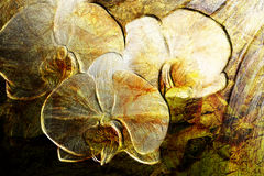 Orchid flowers grunge. Illustration, textured aged surface Royalty Free Stock Photography