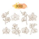 Orchid flowers hand drawn set. Stock Photo