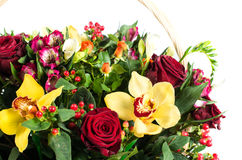 Orchid flowers, hypericum and Alstroemeria Macro Royalty Free Stock Images