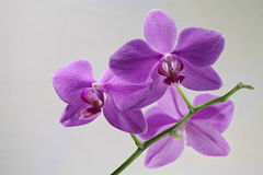 Orchid flowers macro shot Stock Image