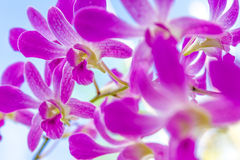 Orchid flowers over natural background Stock Photos