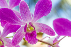 Orchid flowers over natural background Royalty Free Stock Photos