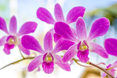 Orchid flowers over natural background Stock Photo