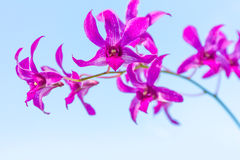 Orchid flowers over natural background Stock Images