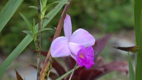 Orchid flowers stock video footage