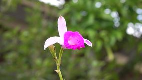Orchid flowers stock footage