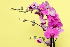 Orchid flowers in pink colors Stock Images