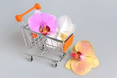 Orchid flowers in pushcart on gray Stock Images