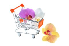 Orchid flowers in pushcart isolated Stock Photos