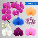 Orchid Flowers Realistic Transparent Collection. Colorful orchid flowers collection branch and blue pink wine mottled heads on transparent background realistic Royalty Free Stock Images
