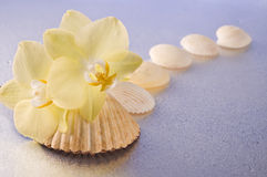 Orchid flowers and seashells Royalty Free Stock Photos