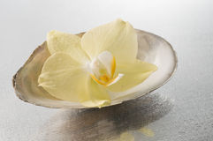 Orchid flowers and seashells Royalty Free Stock Image