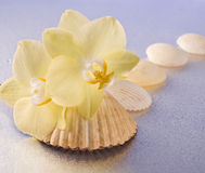 Orchid flowers and seashells Stock Photos