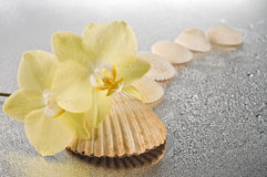 Orchid flowers and seashells Stock Photography