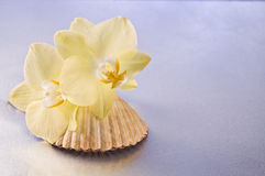 Orchid flowers and seashells Royalty Free Stock Images