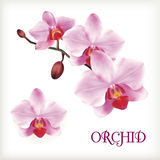 Orchid flowers set Royalty Free Stock Photography
