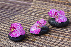 Orchid flowers and spa sones Royalty Free Stock Photo