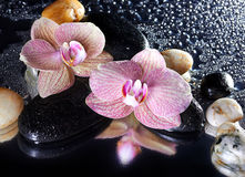 Orchid flowers and stones Stock Images