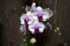 Orchid flowers in subtropical garden Stock Image