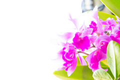 The Orchid  flowers on sunlight in the morning Stock Images