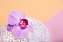 Orchid flowers are two-colored background on the paper. Stock Photography