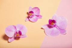 Orchid flowers are two-colored background on the paper. Royalty Free Stock Image