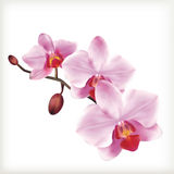 Orchid flowers, vector icon set Royalty Free Stock Photo