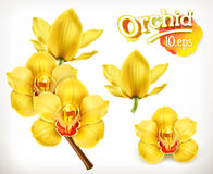 Orchid flowers vector icons Royalty Free Stock Photo