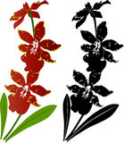 Orchid flowers vector Royalty Free Stock Photography