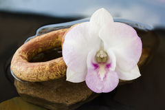 Orchid flowers on water and pebble Stock Image