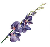 The orchid flowers watercolor isolated Royalty Free Stock Photography
