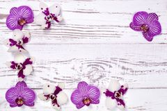 Orchid flowers on white wooden table, top view Royalty Free Stock Photography