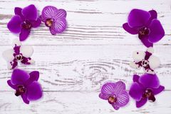 Orchid flowers on white wooden table, top view Royalty Free Stock Image