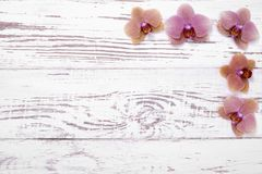 Orchid flowers on white wooden table, top view Royalty Free Stock Images